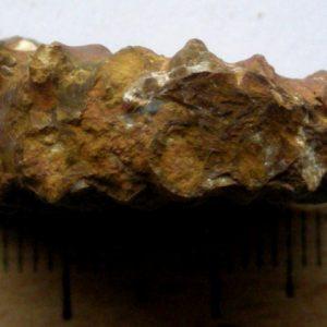 Ammonit - Ectocentrites petersi HAUER (5)