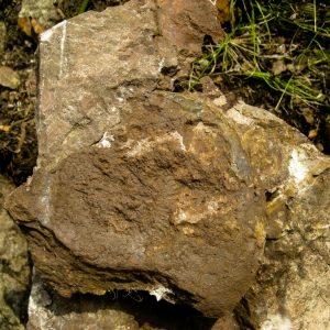 Ammonit - Entdeckung einer neuen Fundstelle 2 (2)