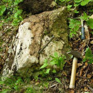 Ammonit - Entdeckung einer neuen Fundstelle 3 (2)
