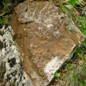 Ammonit - Entdeckung einer neuen Fundstelle 3 (3)