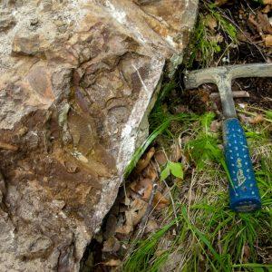 Ammonit - Entdeckung einer neuen Fundstelle 4 (2)
