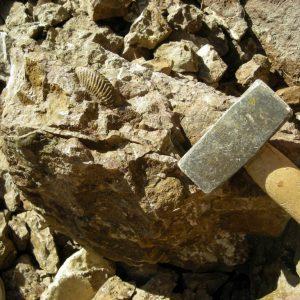 Ammonit - Entdeckung einer neuen Fundstelle 6 (1)