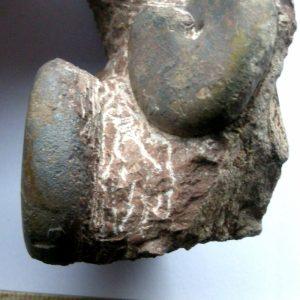 Ammonit - Geyeroceras cylindricum SOWERBY (4)