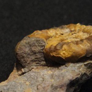 Ammonit - Karwendel-Exkursion am frühen Morgen (10)