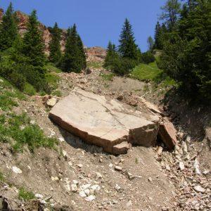 Ammonit - Karwendel-Exkursion am frühen Morgen (6)
