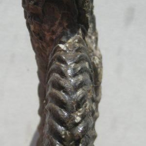 Ammonit - Schlotheimia exechoptycha WÄHNER (2)