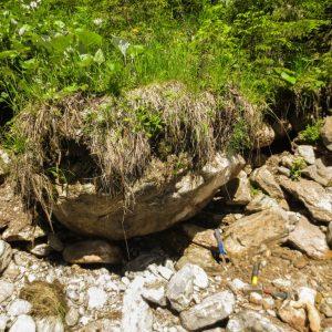 Ammonit - Schwere Hindernisse und ein Vermiceras (6)