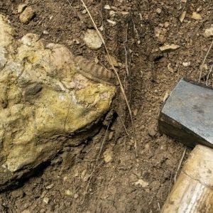 Ammonit - Überraschende Fossilienjagd bei Wien (1)
