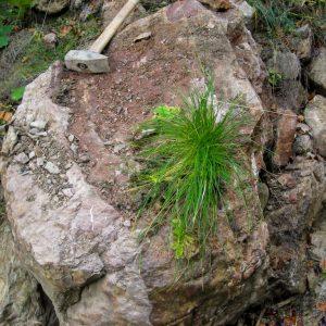 Ammonit - Überraschung auf dem Heimweg AR1-3 (6)