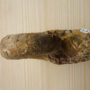 Phylliceratide Ammoniten (3)