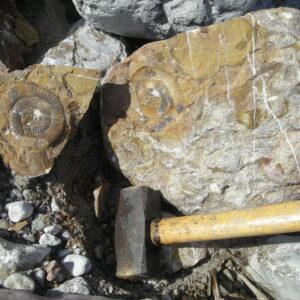 Zufallsfund im Bachbett - Pleuracanthites polycycloides WÄHNER (2)